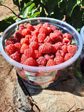 Raspberry Delivery from Yerevan