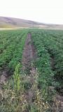 FULVOMIX organic mineral fertilizer Delivery from Ashtarak